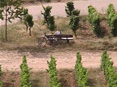 自転車とブドウ
