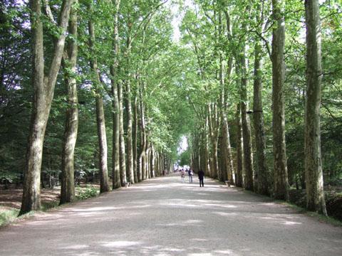 シュノンソーの並木道