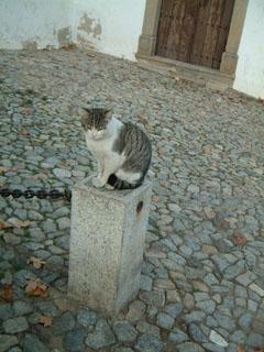 エヴォラの猫