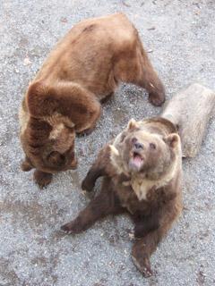 ベルンの熊